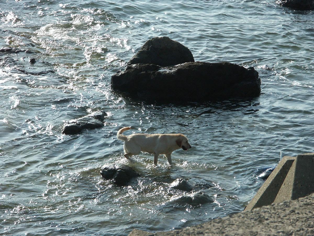 東海の小島の磯の白波に、犬、鳴き濡れて蟹とたはむる