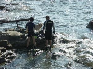 :海で戯れるラブラドールレトリバー