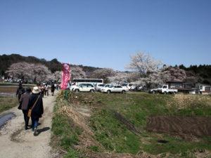 駐車場からは、結構歩く:長井市、伊佐沢の久保桜 -2009年4月18日-