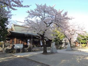 山形市、両所宮の桜 - 2012年