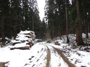 登山口までの林道:真室川町の女甑山周辺で見た大カツラ - 2014年11月