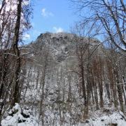 真室川町の女甑山:真室川町の女甑山周辺で見た大カツラ - 2014年11月