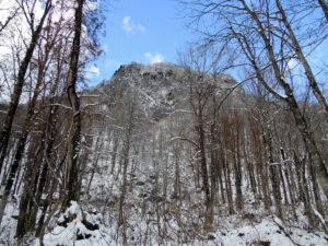 真室川町の女甑山周辺で見た大カツラ - 2014年11月