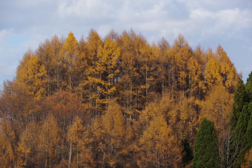 県民の森から白鷹山に登る - 2014年11月